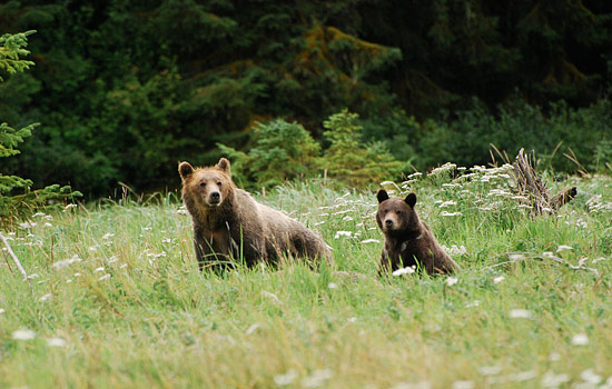 Add on a bear viewing excursion in British Columbia