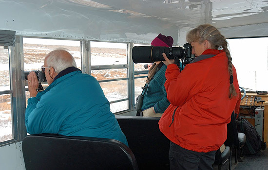Tundra Buggy escorted group tours - Tundra Buggy escorted group tours