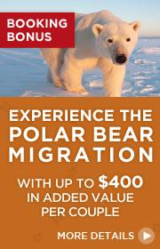 Experience The Polar Bear Migration