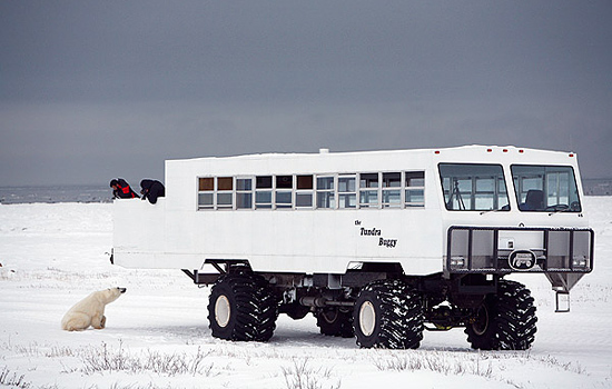 Stay in the town of Churchill and visit polar bears daily on a Tundra Buggy.