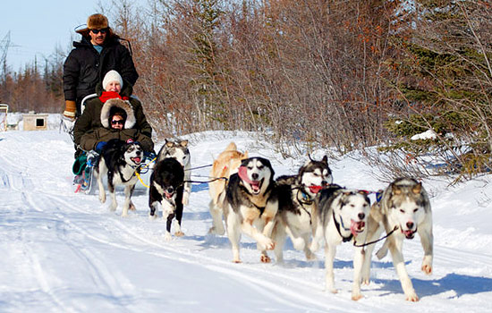 Visitors take a dogsledding tour