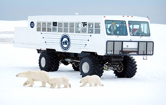 Tourists on a polar bear viewing tour watch from the safety of the Tundra Buggy as a curious polar bear comes to visit