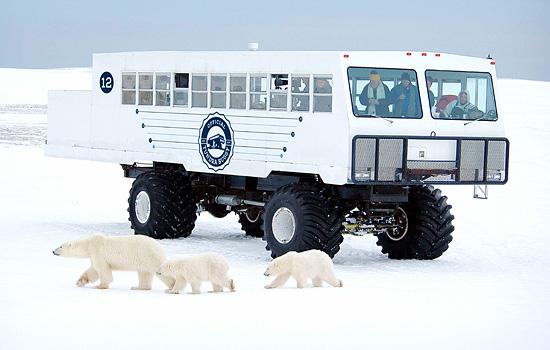 Churchill Polar Bear Viewing Train Tour