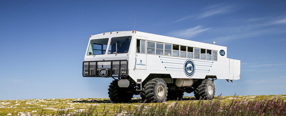 Polar bear tours - Churchill Canada polar bears