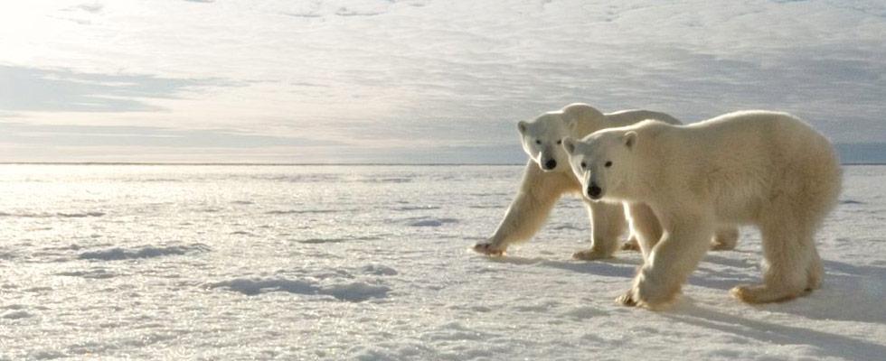 Churchill polar bear tours