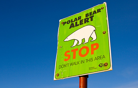 A polar bear warning sign in Churchill, don't walk in this area