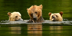 Polar Bears and Grizzlies