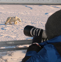 Specialty Polar Bear Tours