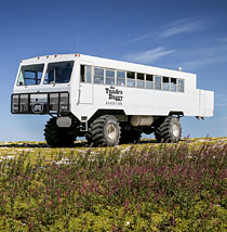 Tundra Buggy Tours